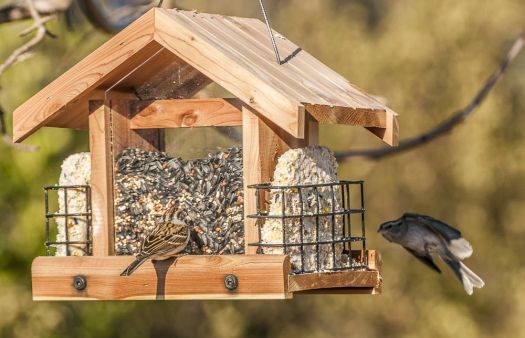 Meanwhile, back at the new feeder.