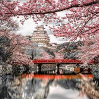 Blossom Lake View