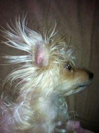 Aww Juliet Got a Bad Hair Day ?