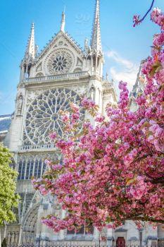 Paris spring  2