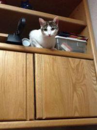 Kitty Button high up