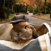 Bunny's favorite hat