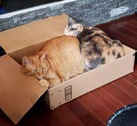 Papaya & Ginger in Box - 2019