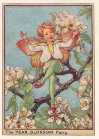 Pear blossom by cicely mary barker