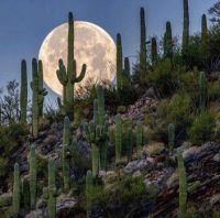 Visit Tucson