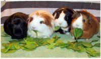 ~Hamsters~