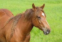 THREE QUARTER HORSE