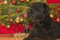 Vánoce s Yumminkou