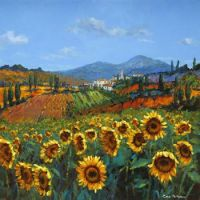 lovely Tuscan sunflowers - Chris McMorrow