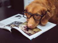 Librarian Pup