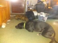 Poblo and Dude laying down