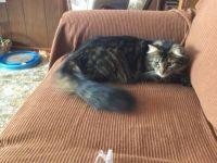 A Kit Cat Tail