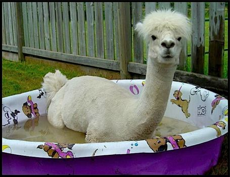 Write a Caption!  swimmer