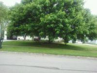 My Sister's Tree