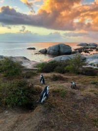 Boulders Beach, Cape Town, South Africa  Austin Distel