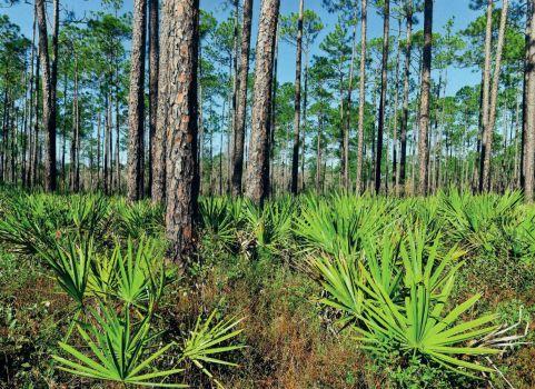 Apalachicola National Forest, FL