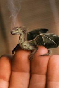baby-dragon-f