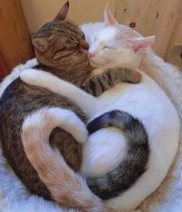 2 Cats In Love With Each Other  :)