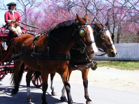 Carriage Driver & Horses