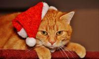Kocour a vánoce