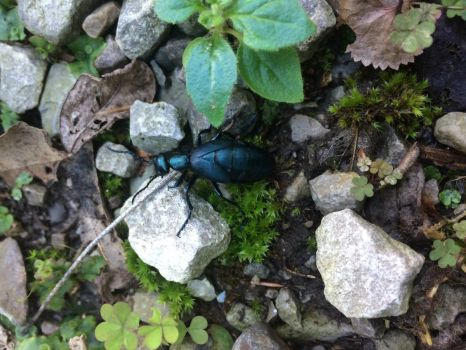 A Beetle in the yard