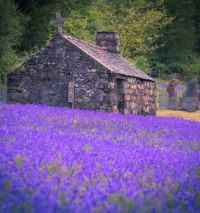 Old Stone House by the Lavender Field...