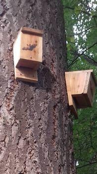 Bat boxes ness islands