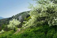K rozkvetlým stromům