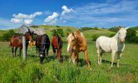 Saskatchewan - Horses near Lumsden