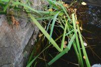 najdi žábu 3 / find the frog 3