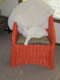 The Last Chair With No Cat Hair - Sigh :)