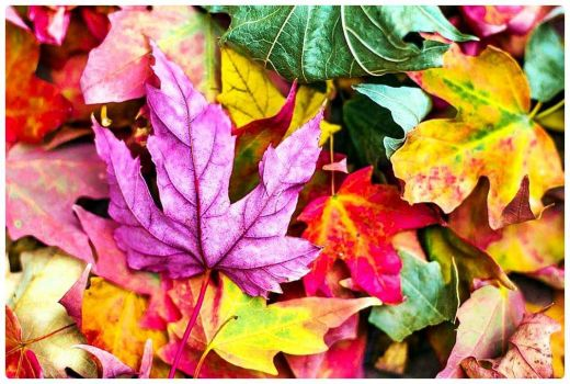 The Colours of Autumn Leaves