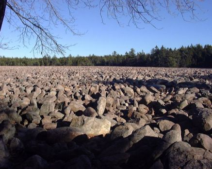 Boulder Field, Hickery Fields State Park, PA, USA