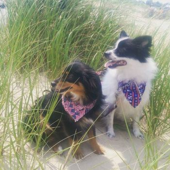 Asher and Spy on the 4th of July 2015