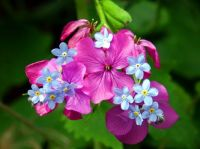 PURPLE AND BLUE FLOWERS...