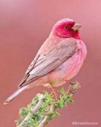 Beautiful Birds - No 45