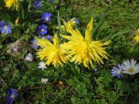 Spring in Victoria Park