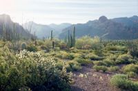 NationalGeographicPhoto.OrganPipeCactusNationalMonument.Arizona