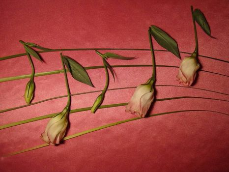 Flower and music
