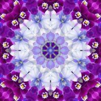 kaleidoscope 387 purple and white medium