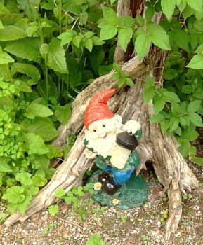Little Gnome lighting the way.
