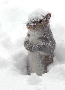 just a little cold squirrel