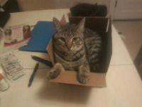 Happy In The Box
