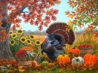 Turkey, Flowers, Pumpkins