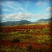 field on Oahu
