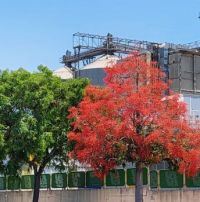 two trees and factory