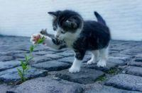 Cute Lil' Kitty