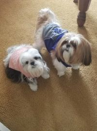 Candy & Cooper sporting their new sweaters