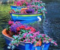 Flowers in boats