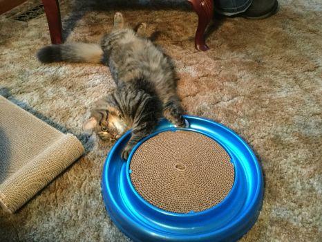 Kit Cat got the ball.